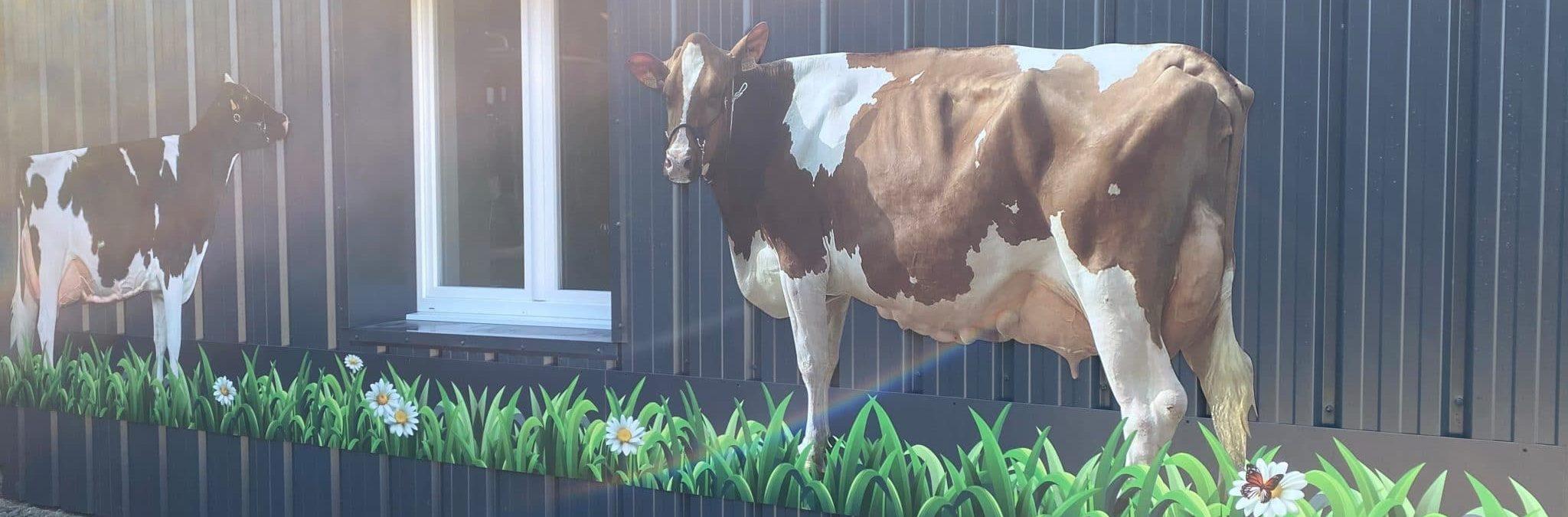 De jolies vaches pour la ferme du Gaec du Zercis dans la Manche